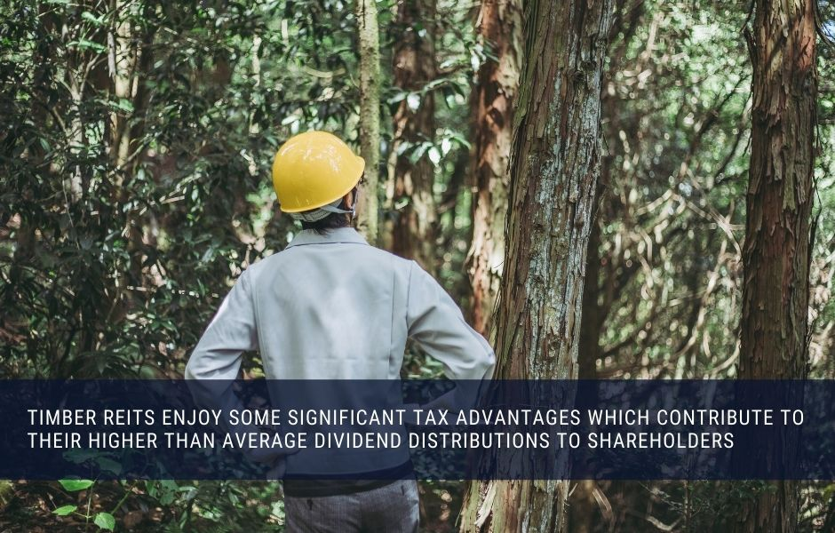 A timber REIT enjoys significant tax breaks
